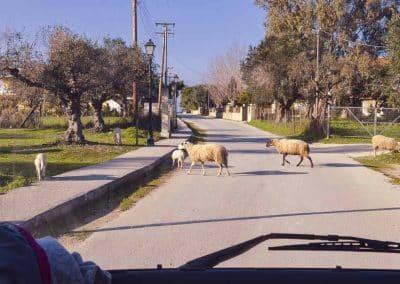 Rush Hour in Zakynthos