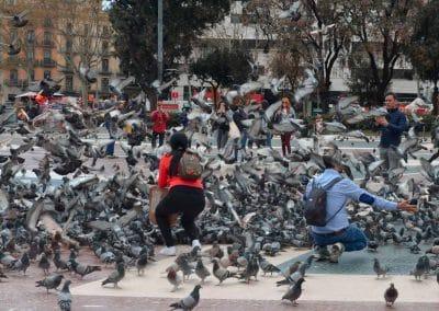 Pigeons Barcelona