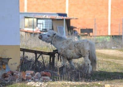 Run away Donkey