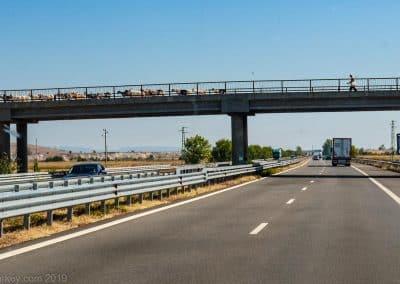 Goats Bulgarian Motorway